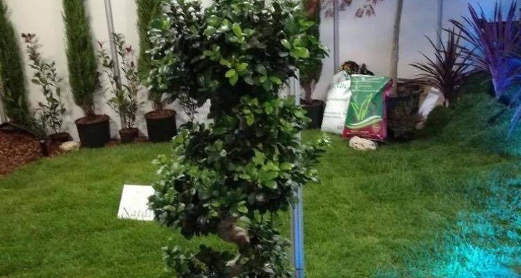 Raia Verde