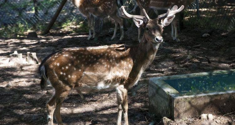 Parque Ecológico de Gouveia
