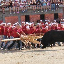 equipa_de_forcalhos_no_festival_o_forcao_rapazes_2012_20120829_1277379212