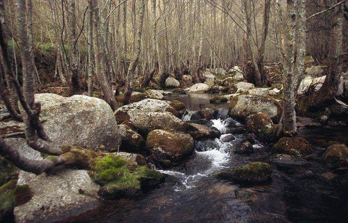 Rio Alva. Poldras. (JC)
