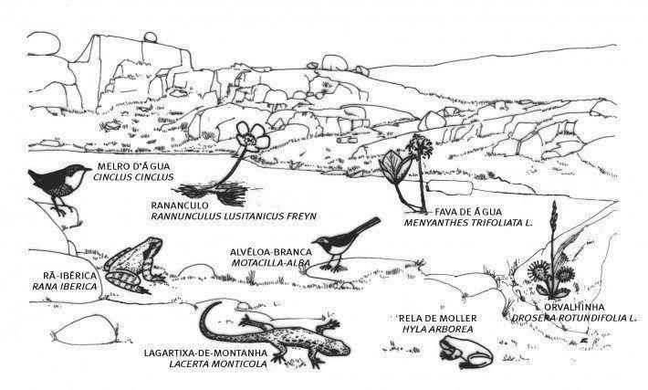 Comunidades lacustres. (LAC)(AC)